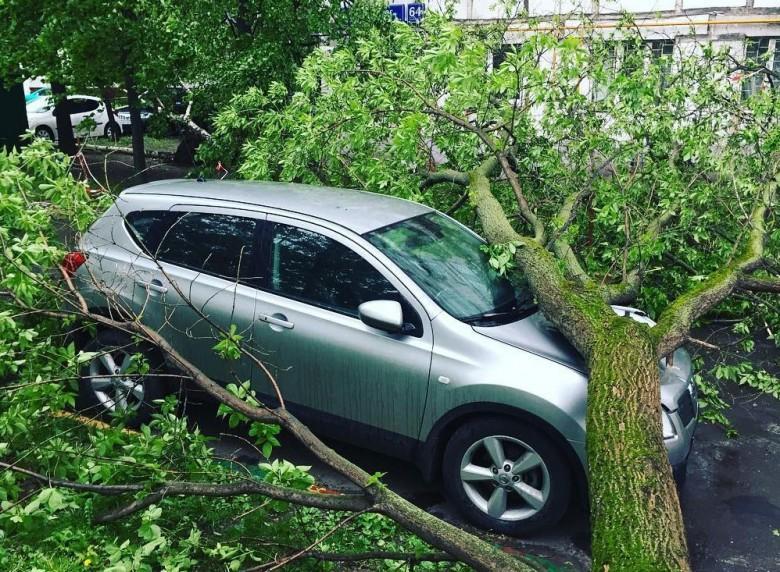 Можно ли получить компенсацию с коммунальщиков за упавшее на авто дерево?