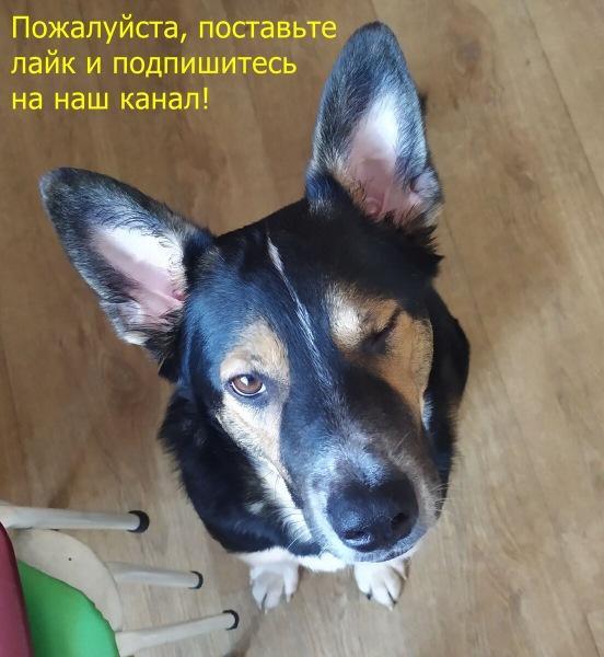 ГИБДД начала отлов автоблоггеров :-)